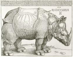 Albrecht Dürer, Rhinozeros
